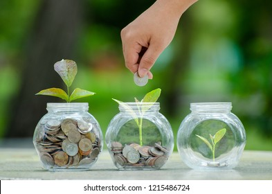 Coin tree Glass Jar Plant growing from coins outside the glass jar money saving and investment financial concept