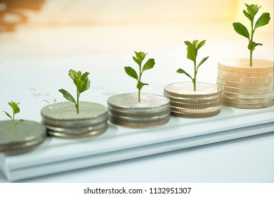Coin with tree in mutual funds dollar-cost averaging concept.