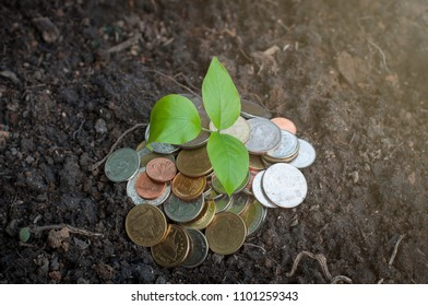 Coin tree sunlight soil background