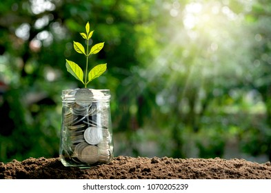 coins in glass jar concept with young plant on top in the morning under garden  background.