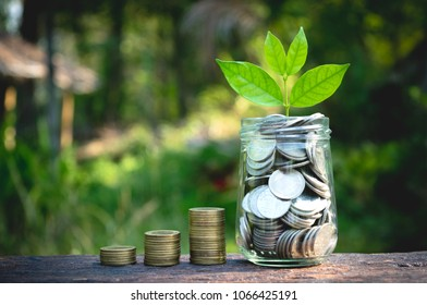 Coins in glass jar with the small tree on top Set on wooden plate, put in a green park background also some coins beside.
