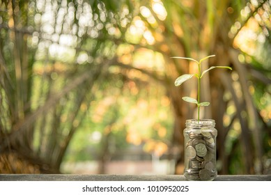 coins in glass and stack coins with tree for business finance and tax season with copy space and text box.finance and business management concept and idea for save cost.