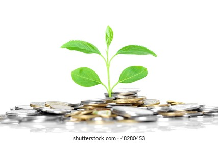 coins and green plant, isolated on white background