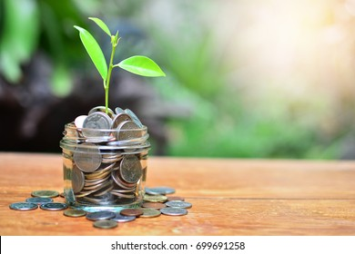 coins growth to profit concept fund investment finance and business