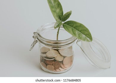 Coins inside a glass jar with a green plant growing inside it, on white table.