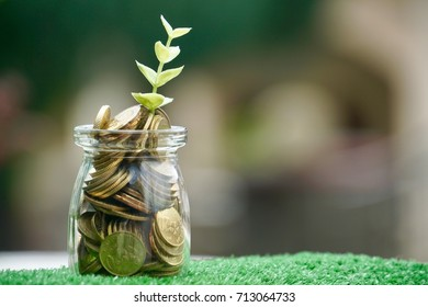 Coins jar with new plant growing on bokeh background
