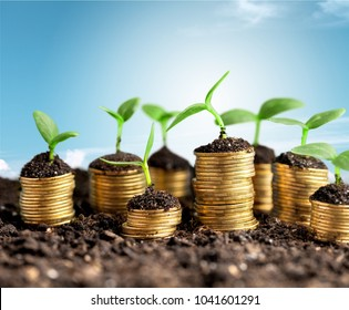 Coins with money growing plant concept finance
