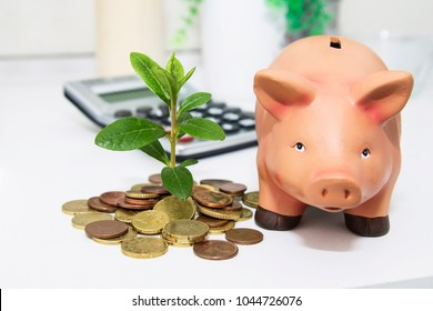 coins on the office table with young plant and piggy bank, savings concept