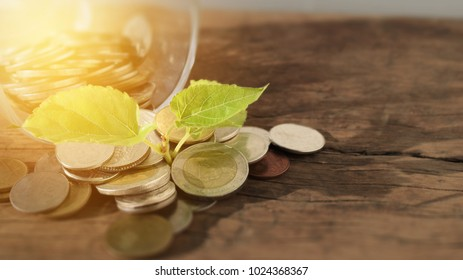 coins out of glass with green leaf growing on wood background, concept of money saving and investment