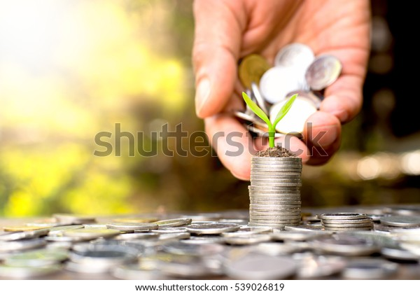 Coins placed and sprouts on top. While a men's hand pouring coins.