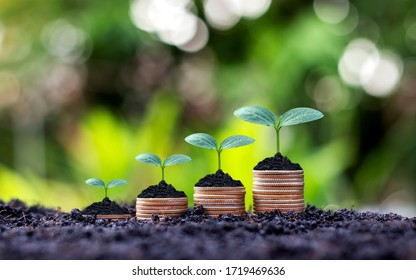 Coins and plants are grown on a pile of coins for finance and banking. The idea of saving money and increasing finances.