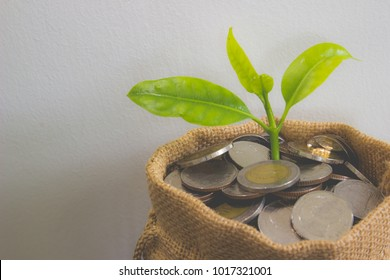Coins in sack and plant glowing in savings coins, Show Stock asset investment, Retirement plan, Pension fund, 401K, Passive income, Wage, Millionaire, Financial freedom and wealth increment concept.