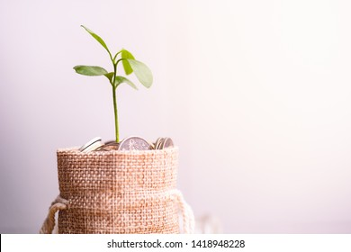 Coins in sack and plant glowing in savings coins, Pension fund, 401K, Passive income, Investment and retirement concept. savings and making money, Business investment growth concept. Risk management.