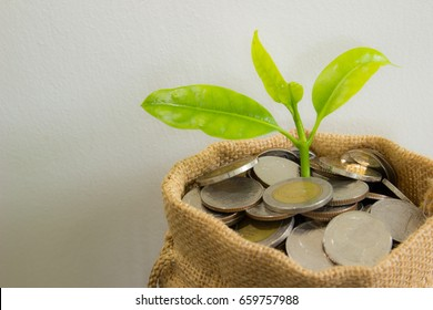 Coins in sack and plant glowing in savings coins, Show Stock asset investment, Retirement plan, Pension fund, 401K, Passive income, Wage, Millionaire, Financial freedom and wealth money concept.
