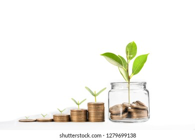 coins with seed in clear bottle on white background,Business investment growth concept,saving concept