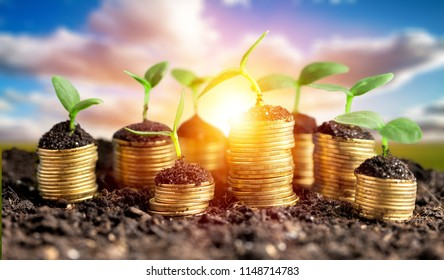 Coins in soil with young plants