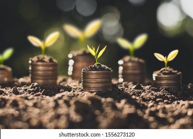 Die Münzen werden auf dem Boden gestapelt, und die Samen wachsen an der Spitze, das Konzept der Einsparung von Geld und Finanzwachstum.