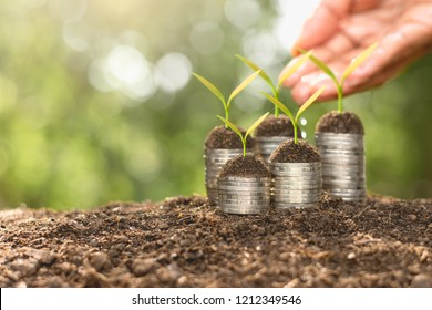 Coins are stacked and the seedlings are growing on top. As the hands of men are watering.