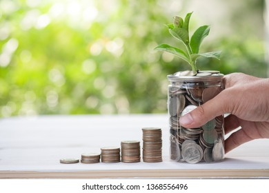 Coins stacking with growing plant on greenery blurred background and sunlight.It is use for saving and long term investment.-Image.