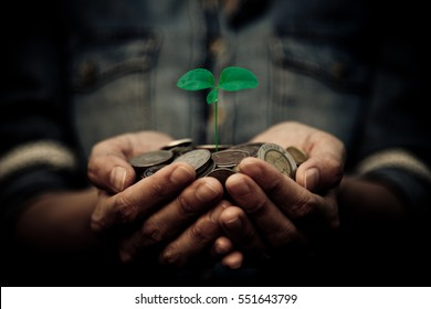 A coins with tree in people hands in saving and growing money concept