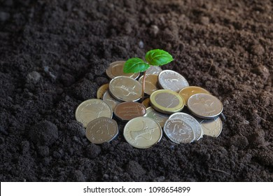 Coins of UAE. Coins and green plant on fertile land