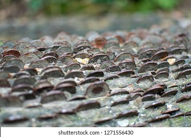 Coins in the Wish Tree, St Nectan's Glen, Cornwall UK