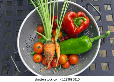 A colander filled with raw, vibrantly colorful, freshly picked, and one heart shaped garden vegetables still crusty with soil and good for the microbiome