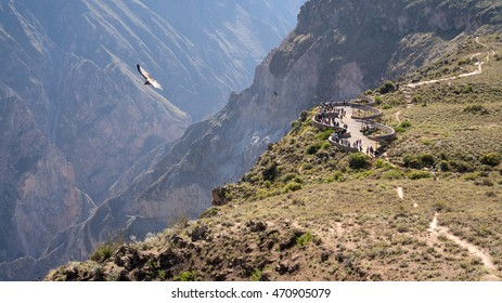 Colca Canyon is one of the deepest in the world and second in Peru. The canyon is home to the Andean condor (Vultur gryphus), a species that has been the focus of worldwide conservation efforts.