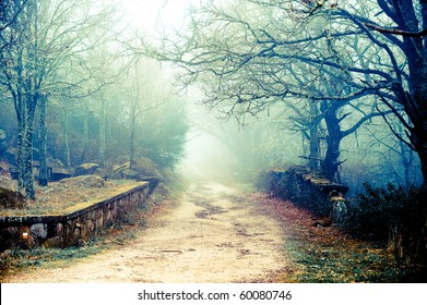 Cold autumn days are bringing beautiful colors, mysterious fog and some spooky moods