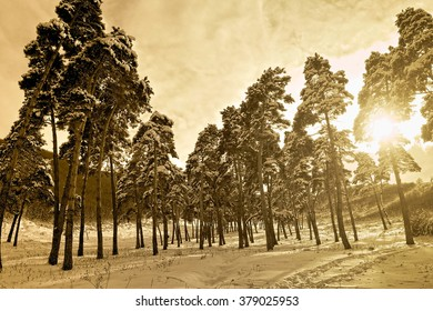 cold day in the snowy winter forest