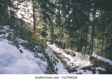 cold day in the snowy winter forest with fog and frost - vintage film effect