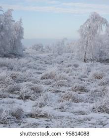 A cold dutch landscape