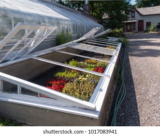 Cold Frames beside greenhouse