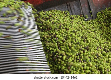 Cold press for olives to produce olive oil