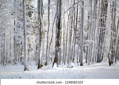 Cold and snowy winter day in tree forest landscape.