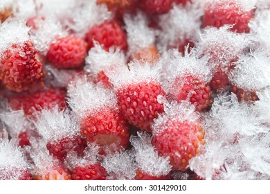 Cold storage concept. Frozen wild strawberries in the refrigerator. Small sweet red fruit berries  with ice and snow crystals a seed-studded surface, texture. Closeup, detailed. Soft focus