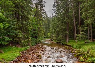 Cold stream in Koscieliska valley, Tatra mountains, Poland