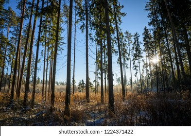 cold and sunny winter morning in the forest