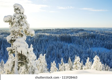 Cold swedish winter landscape