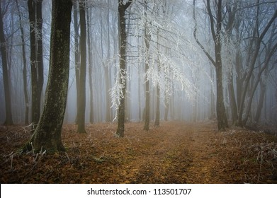 cold weather in forest