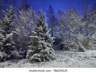 Cold weather and snowy trees at winter night