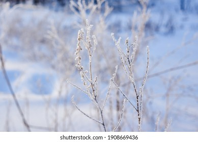 a cold winter day in the forest. the plants are covered with frost