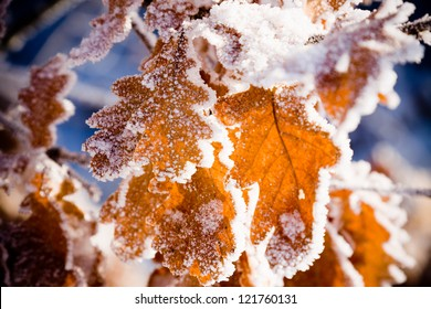 Cold winter day and Frost on leaves