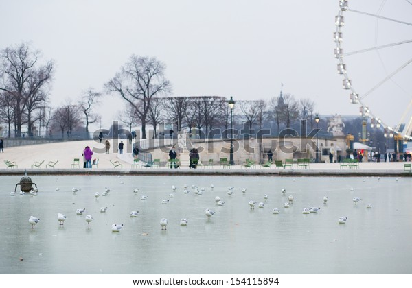 Cold winter day in Paris. Seagulls on the frozen pond