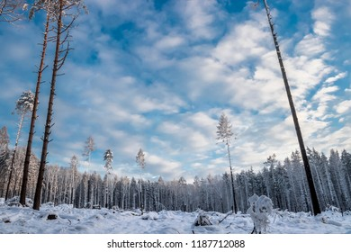 Cold winter forest - Shutterstock ID 1187712088