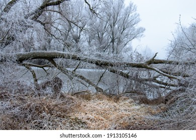 Cold winter frozen landscape with frosty trees, limbs, woods and lake behind
