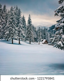 Cold winter morning in Carpathian mountains with snow covered fir trees. Splendid outdoor scene, Happy New Year celebration concept. Beauty of nature concept background.