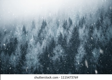 Cold winter season forest landscape during heavy snowfall.