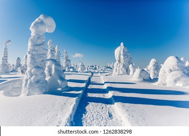 Cold winter with lot of snow and blue sky. Snow covered fir trees on the background. Beautiful snowy winter landscape. Finland, Lapland
