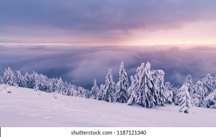 Cold winter with snowy trees and beutiful landscape.